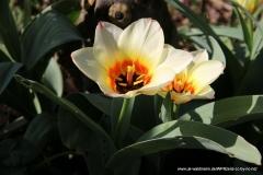 04072020-R8-Garten_037