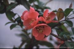 05000000-R8-Garten_002