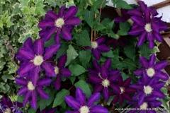 05252017-R8-Garten_027