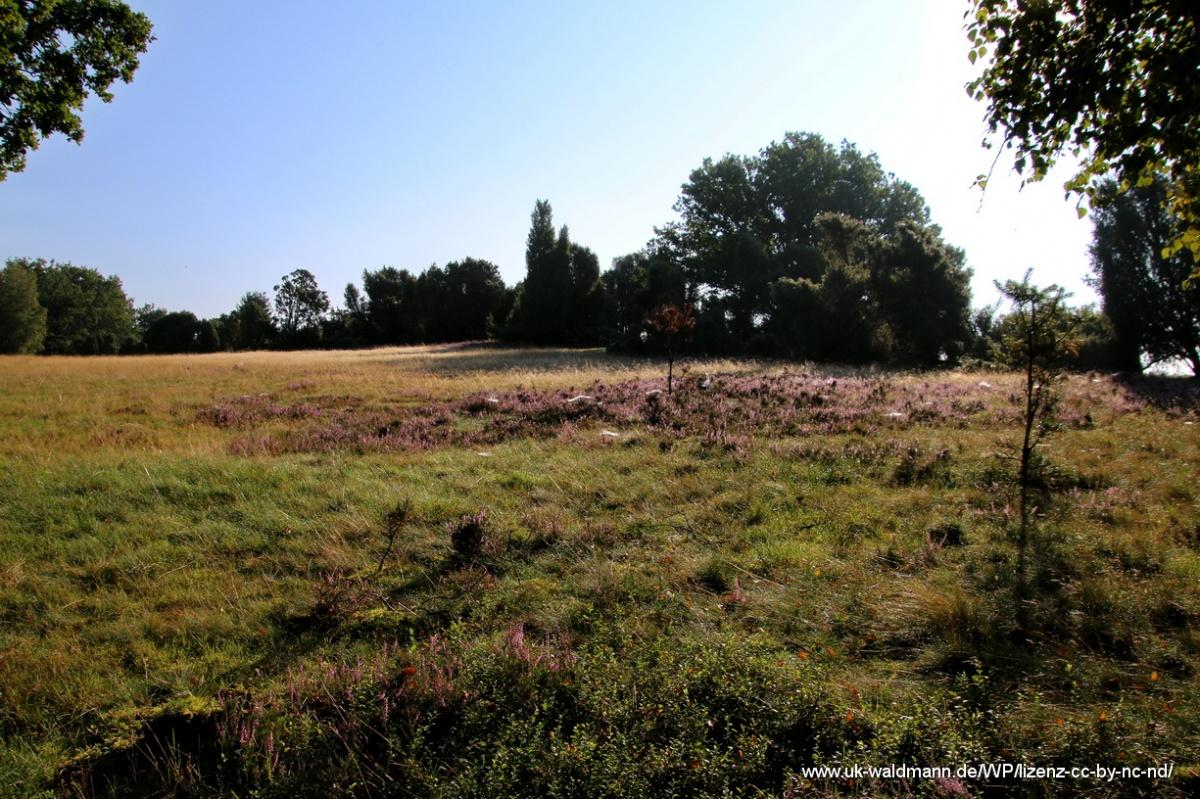 2021-08-31_Lueneburger-Heide_012