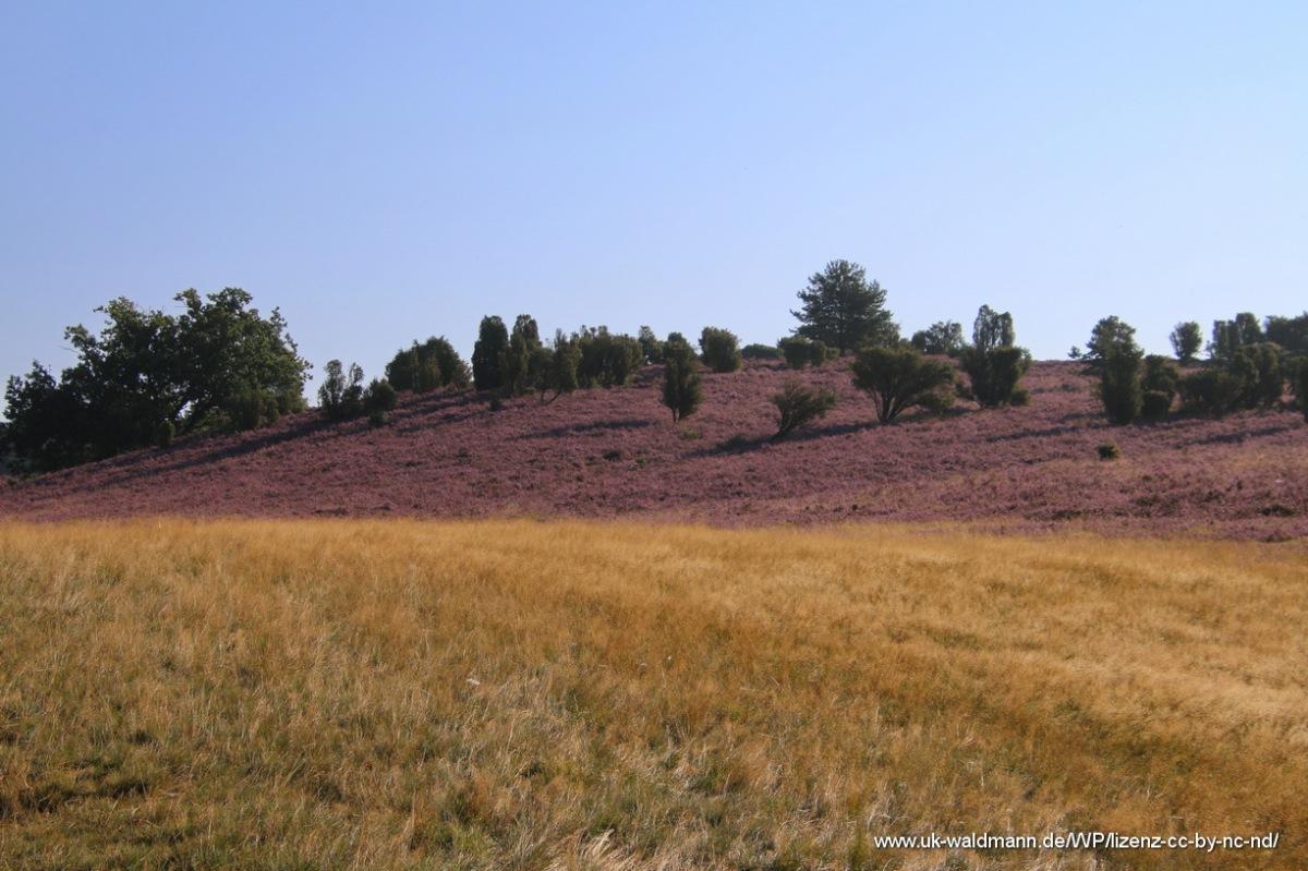 2021-08-31_Lueneburger-Heide_014