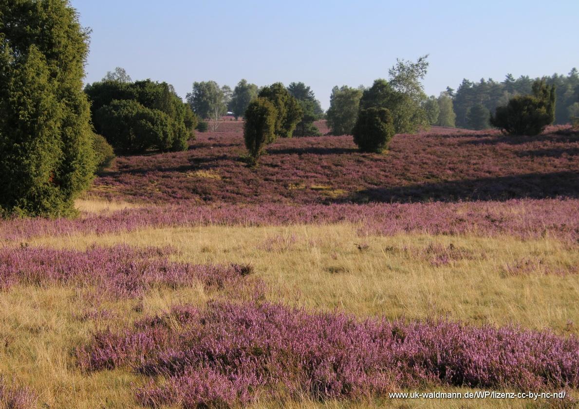 2021-08-31_Lueneburger-Heide_018