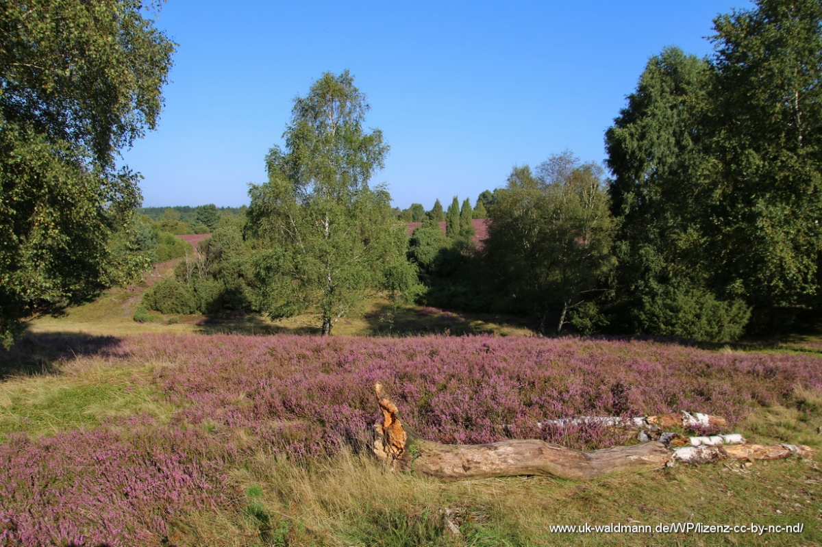 2021-08-31_Lueneburger-Heide_021