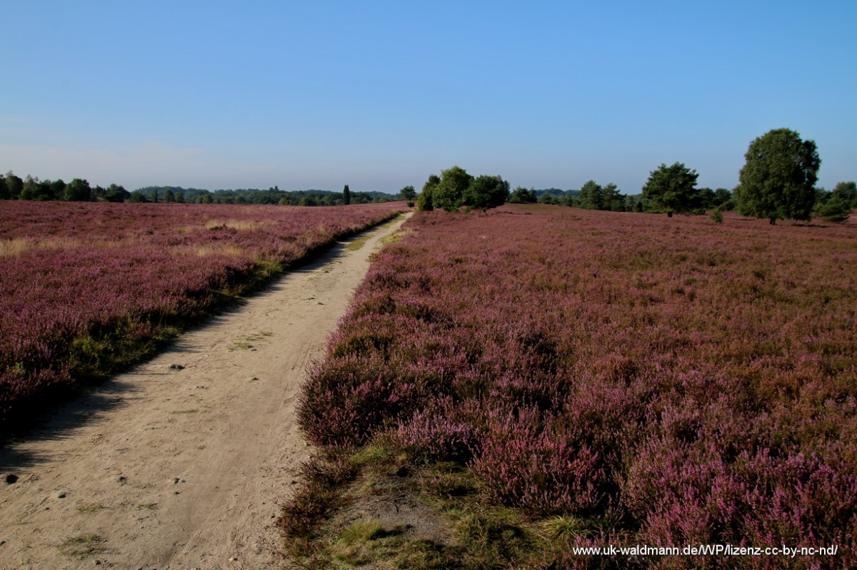 2021-08-31_Lueneburger-Heide_031