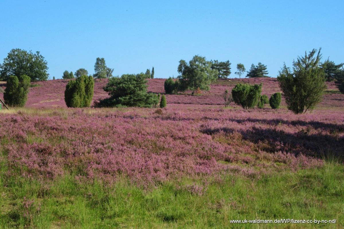 2021-08-31_Lueneburger-Heide_033