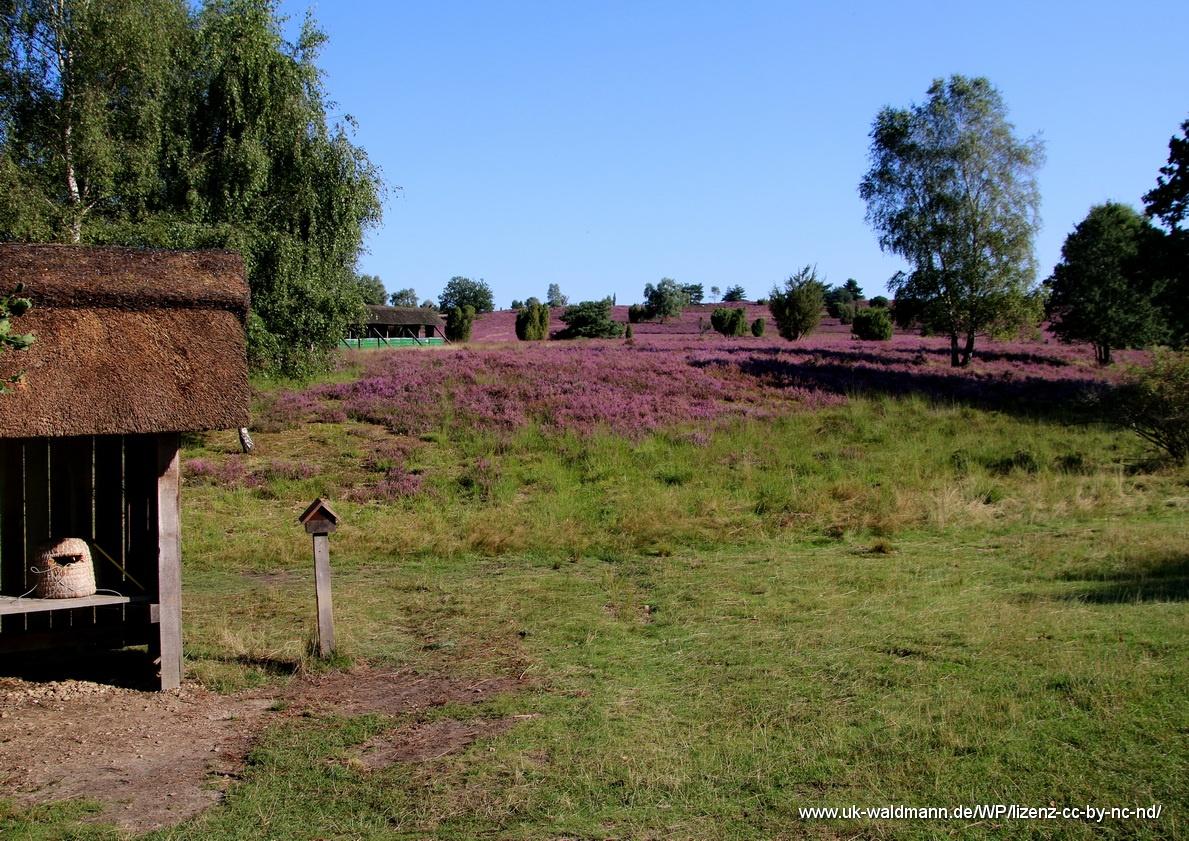 2021-08-31_Lueneburger-Heide_034