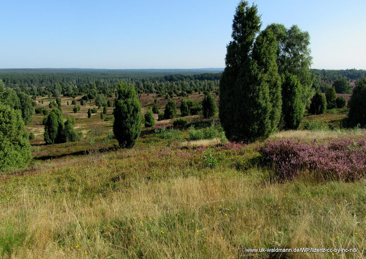 2021-08-31_Lueneburger-Heide_047