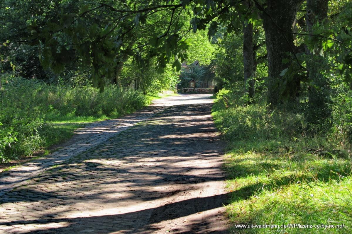 2021-08-31_Lueneburger-Heide_060