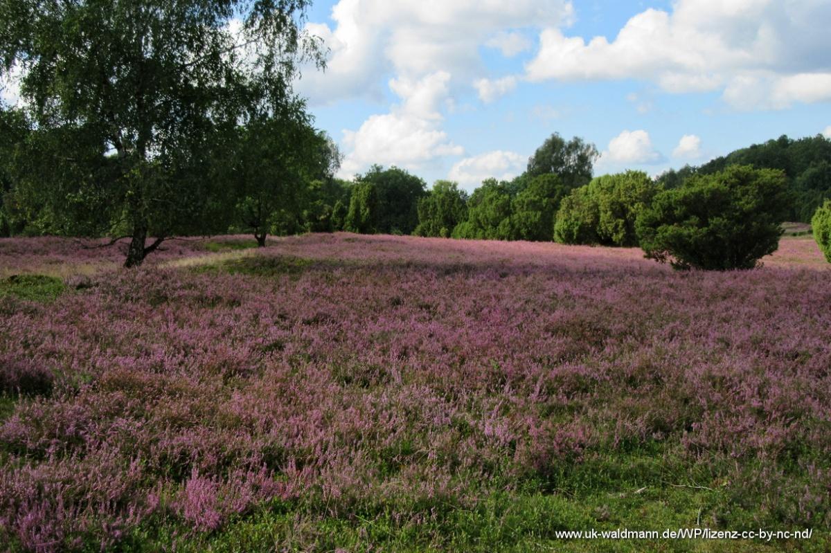 2021-08-31_Lueneburger-Heide_071