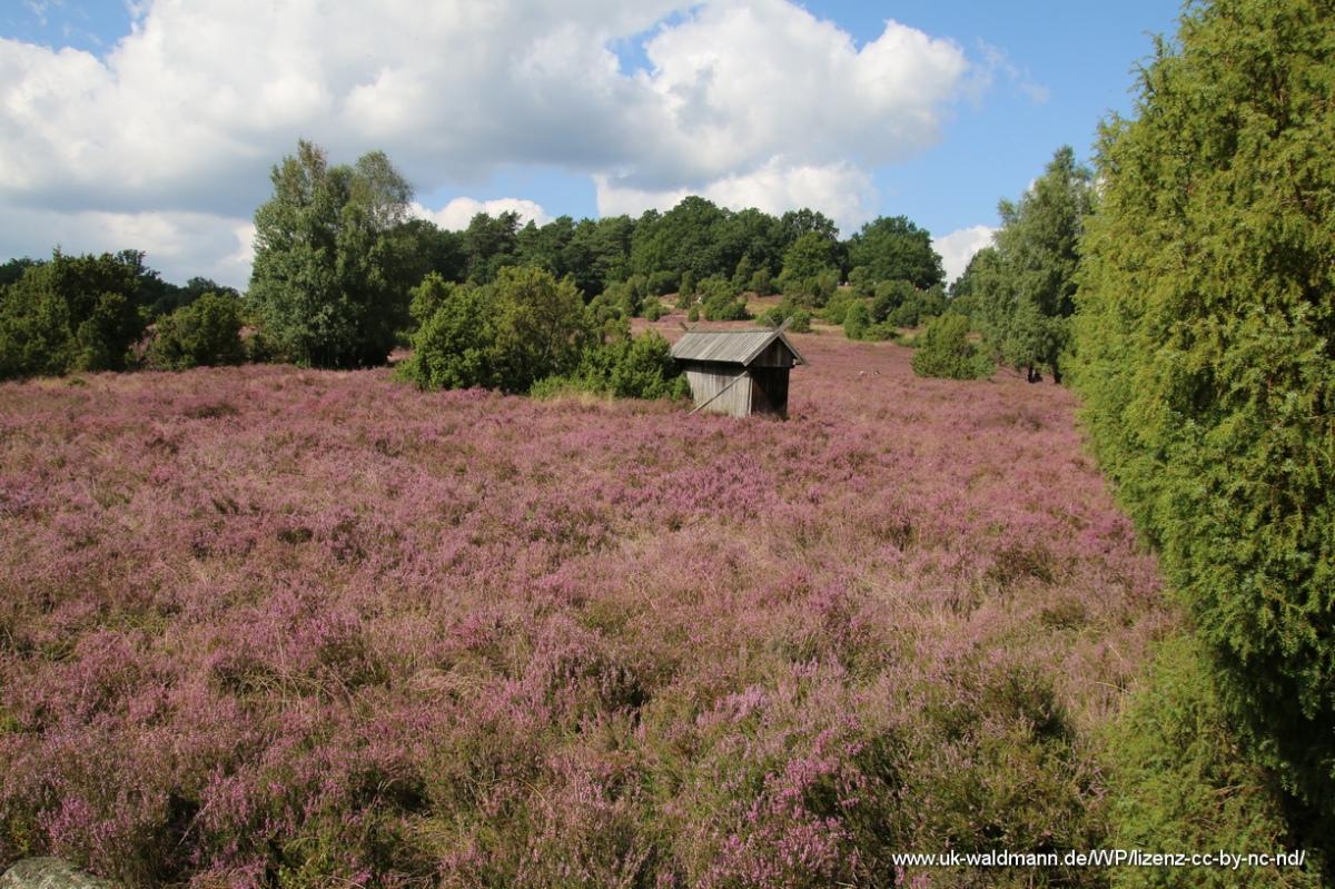 2021-08-31_Lueneburger-Heide_104