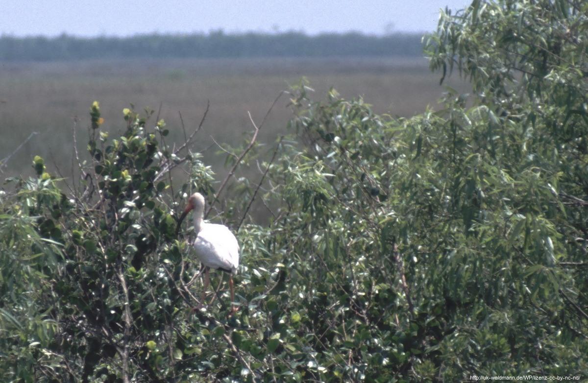 2000-Florida-052