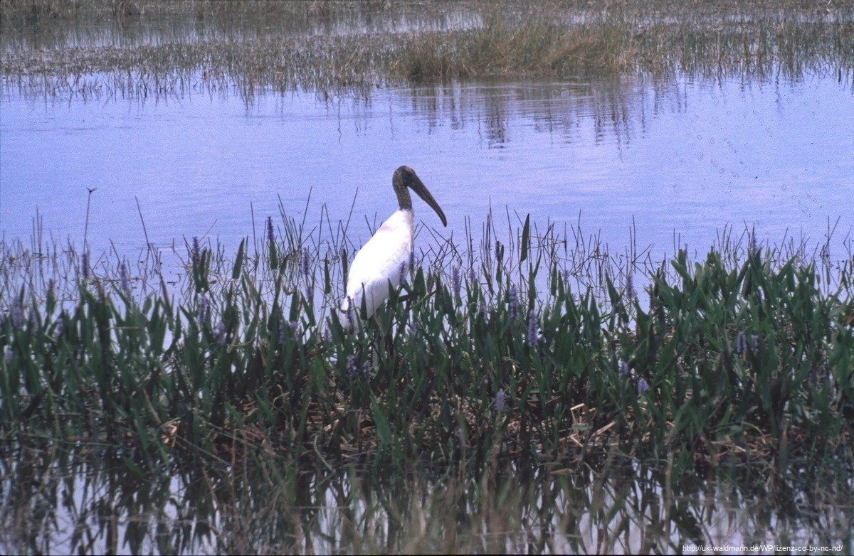 2000-Florida-064