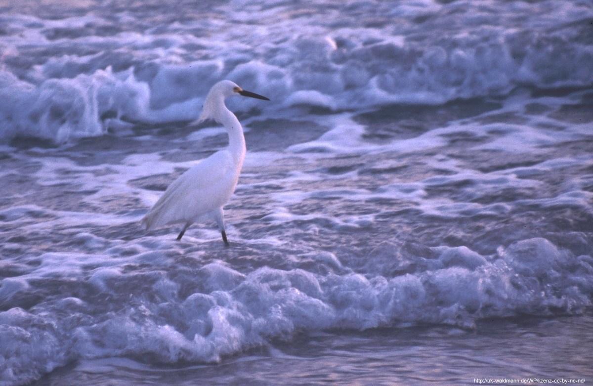 2000-Florida-086