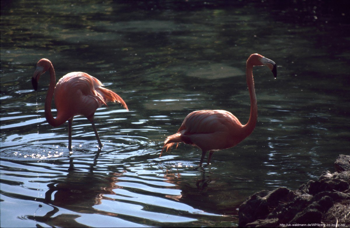 2000-Florida-152