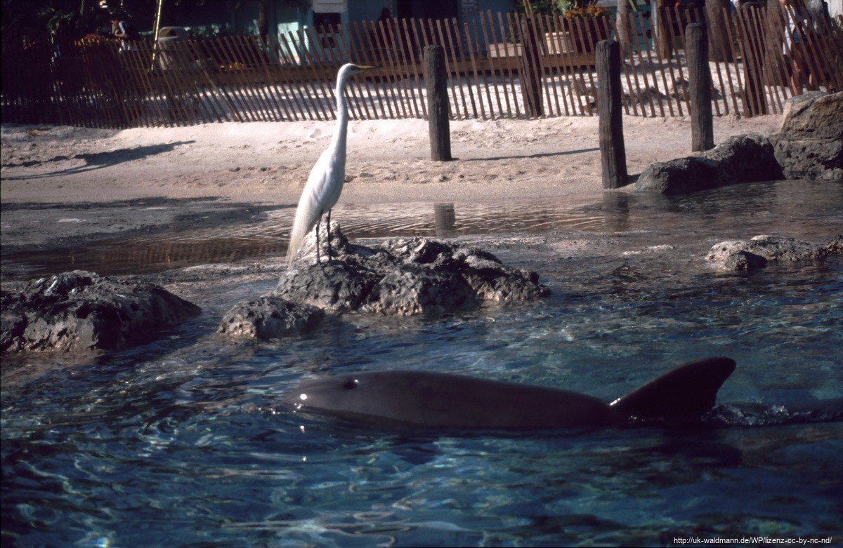 2000-Florida-154