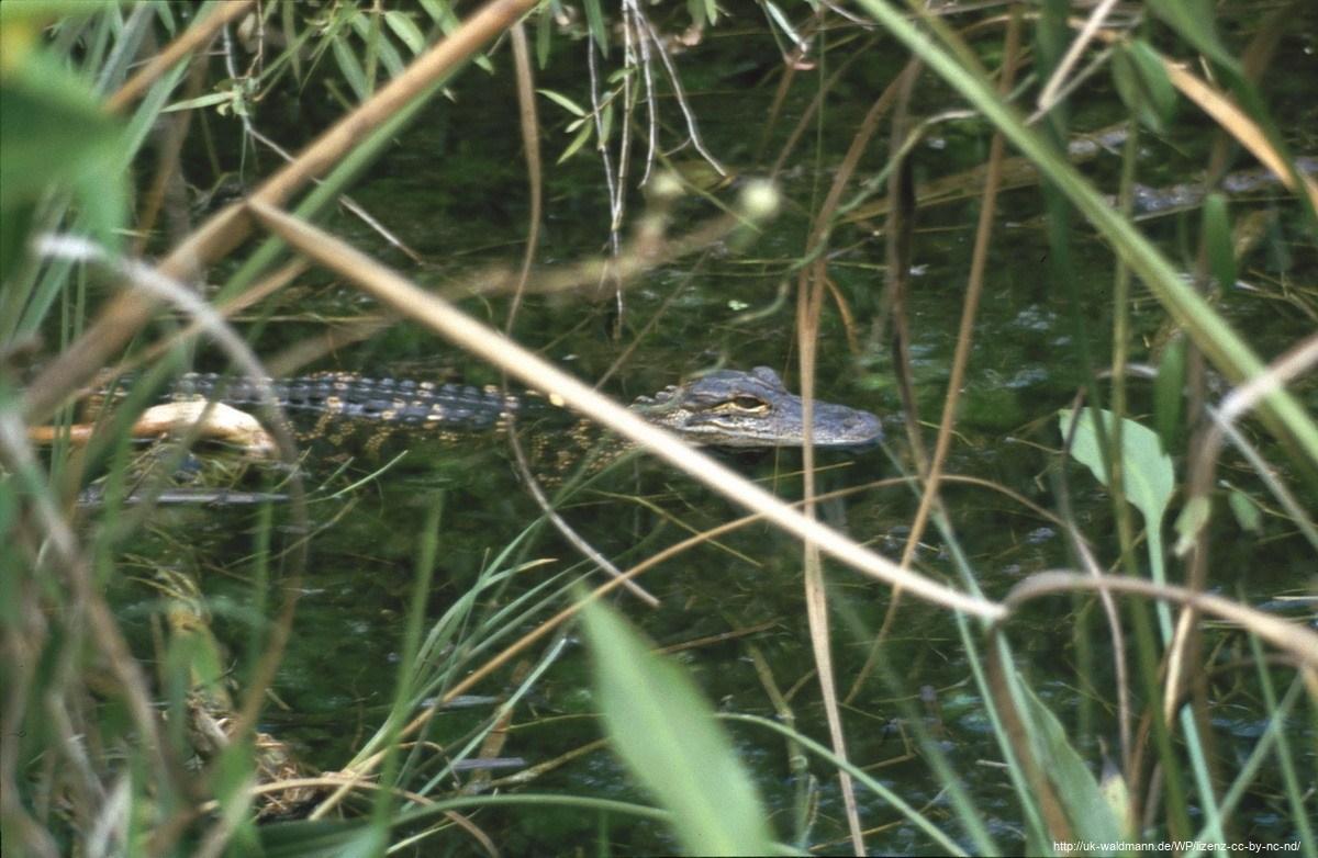 2000-Florida033