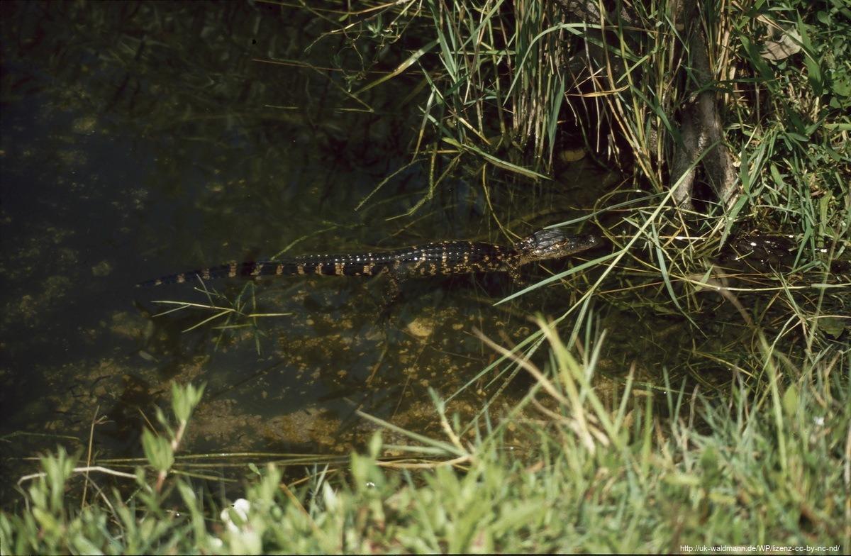 2000-Florida035