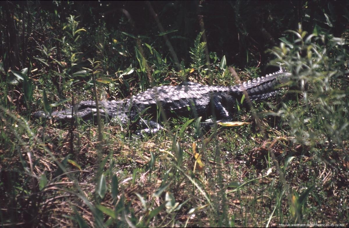 2000-Florida039