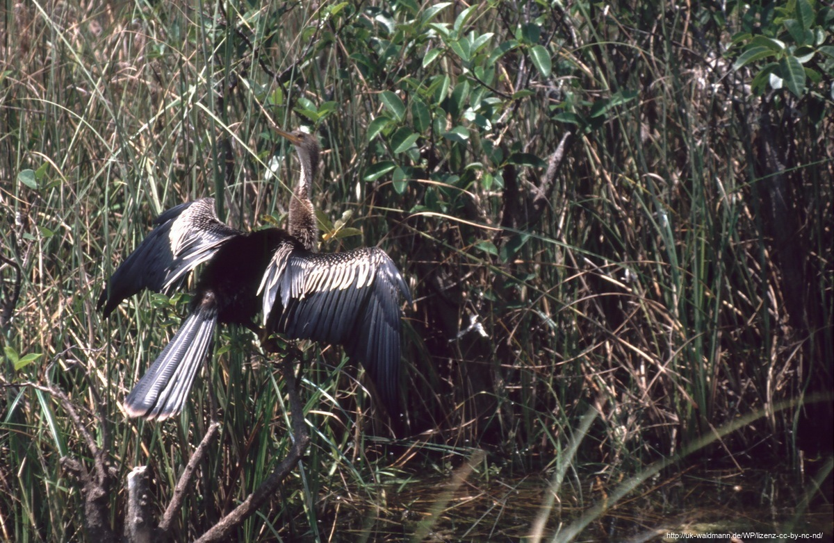 2000-Florida042