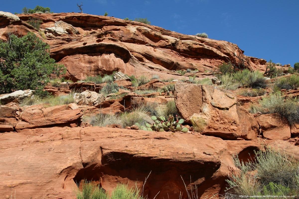 Hike-Lower-Calf-Creek-Canyon-002