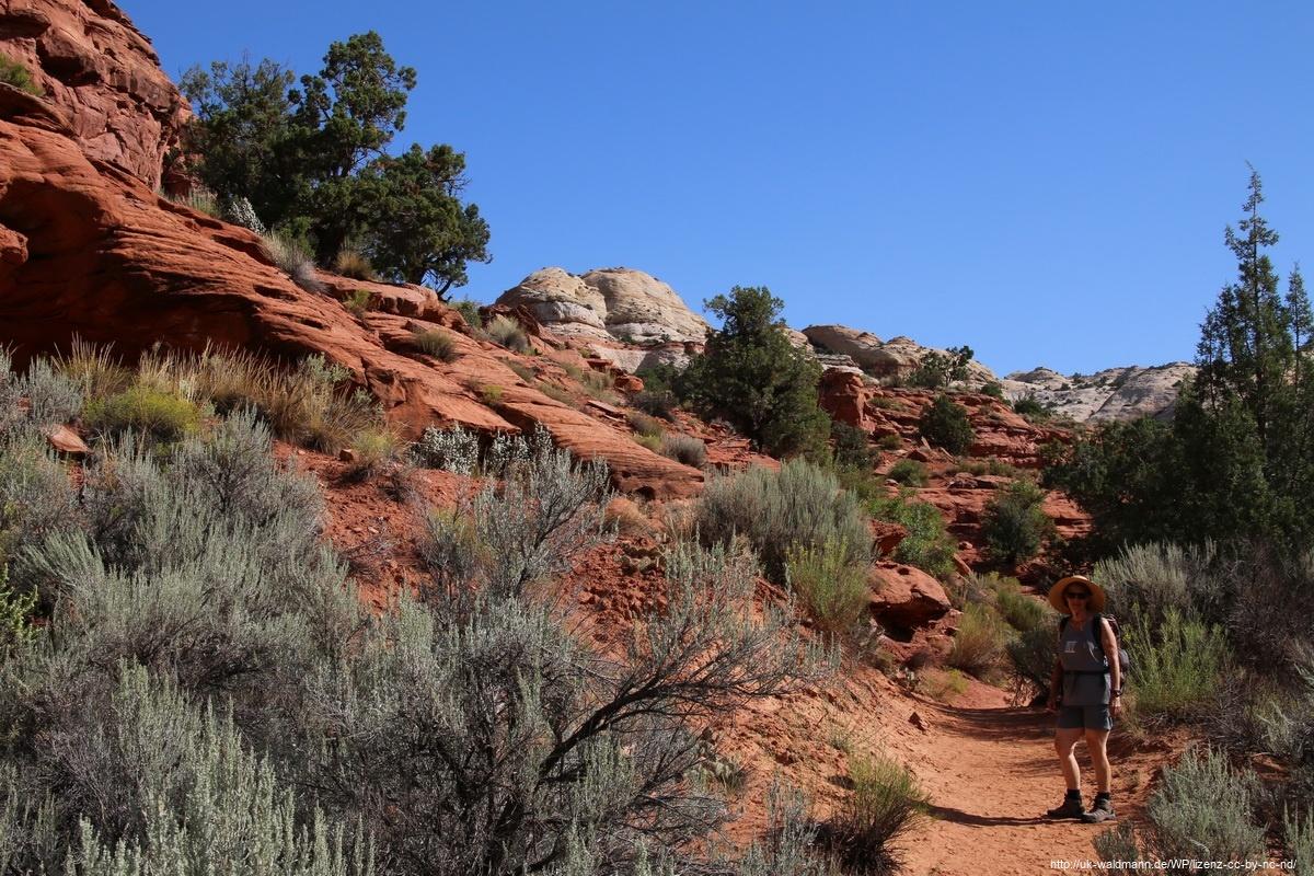 Hike-Lower-Calf-Creek-Canyon-004