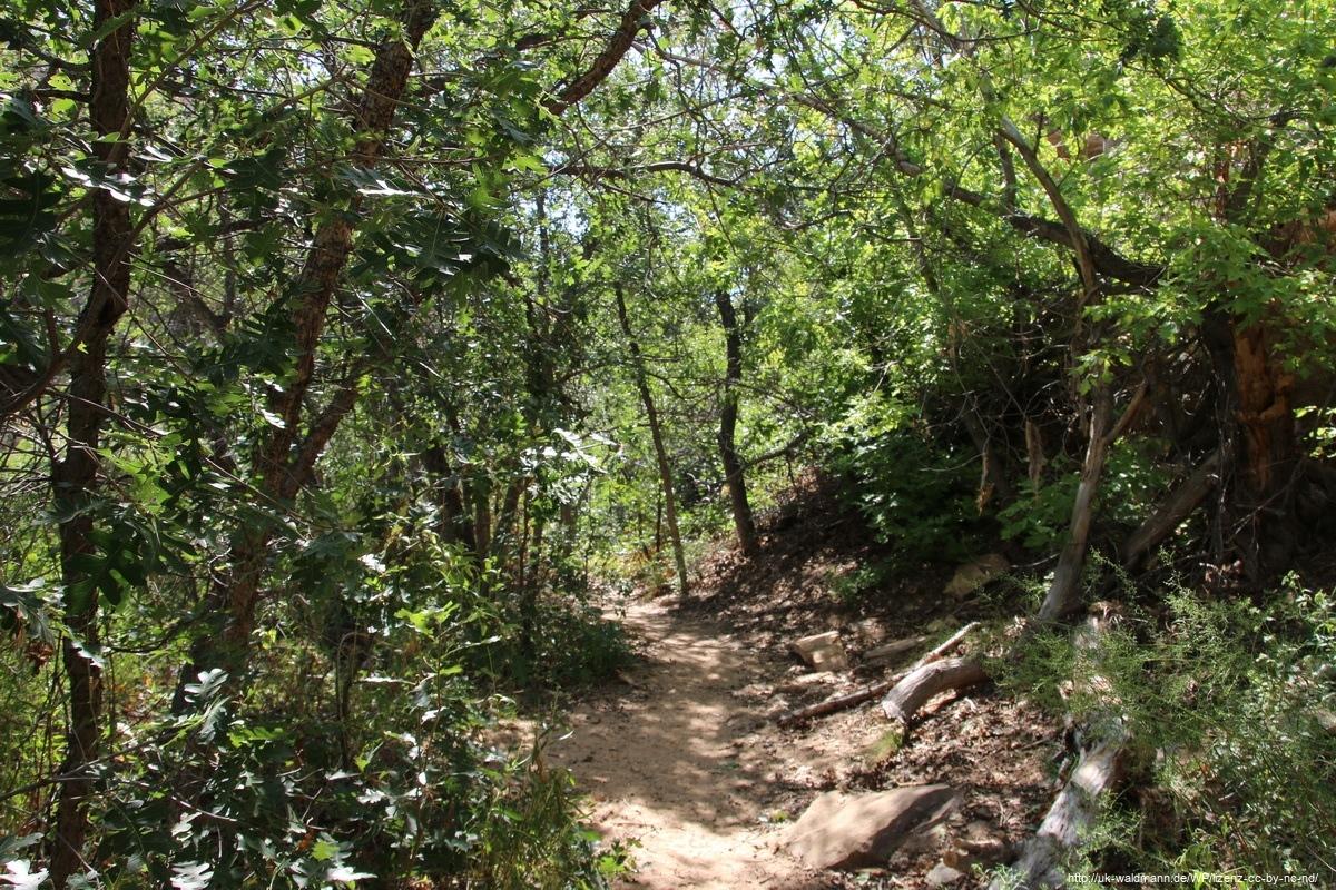 Hike-Lower-Calf-Creek-Canyon-010