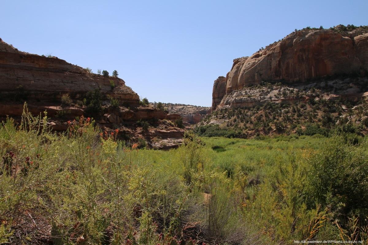 Hike-Lower-Calf-Creek-Canyon-013