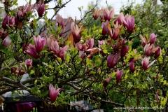 04242020-R8-Garten_052