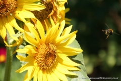 07252010-R8-Garten_008